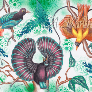 Paintings - Animals - Tanzende Paradiesvögel